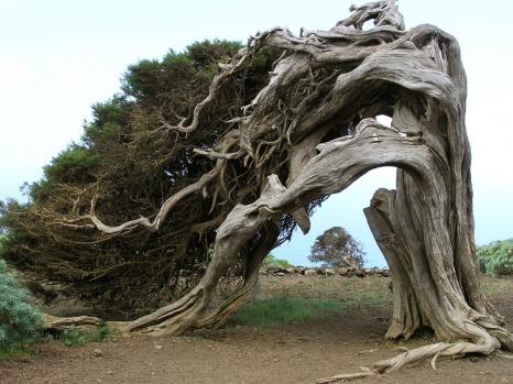 Hayata Dört Elle Sarılıp Yaşam Mücadelesi Veren Asırlık Ağaçlar