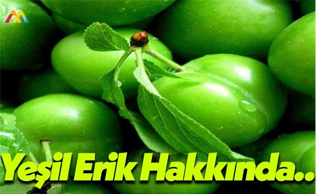 Yeşil Erik Hakkında Doğrular ve Yanlışlar!