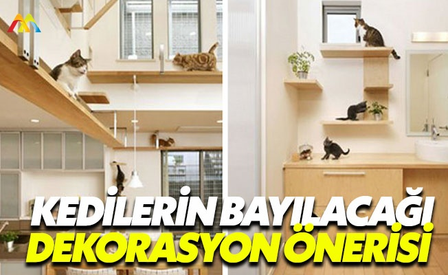 Kediler bu dekorasyon önerisine bayılacak