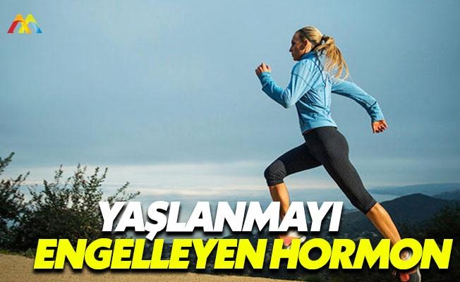 Sağlığımızı koruyan hormonlar: İrisin hormonu