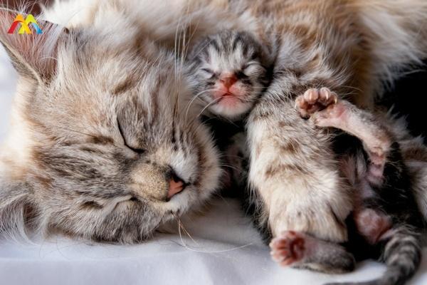 Kediler Ne Zaman Kısırlaştırılmalıdır?